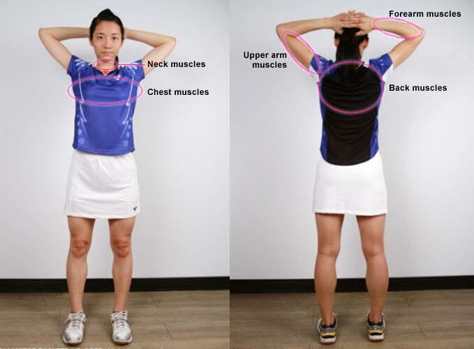 گروه عضلات اصلی بالا تنه که در ورزش بدمینتون مورد استفاده قرار می گیرند